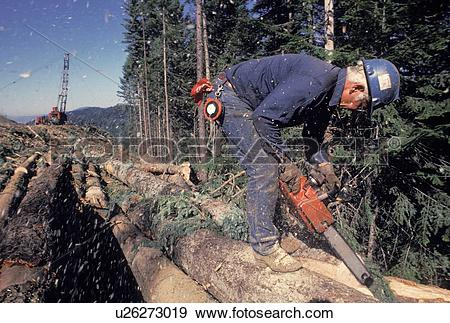 "Stock Photograph of ""Logger sawing logs, Idaho"" u26273019."