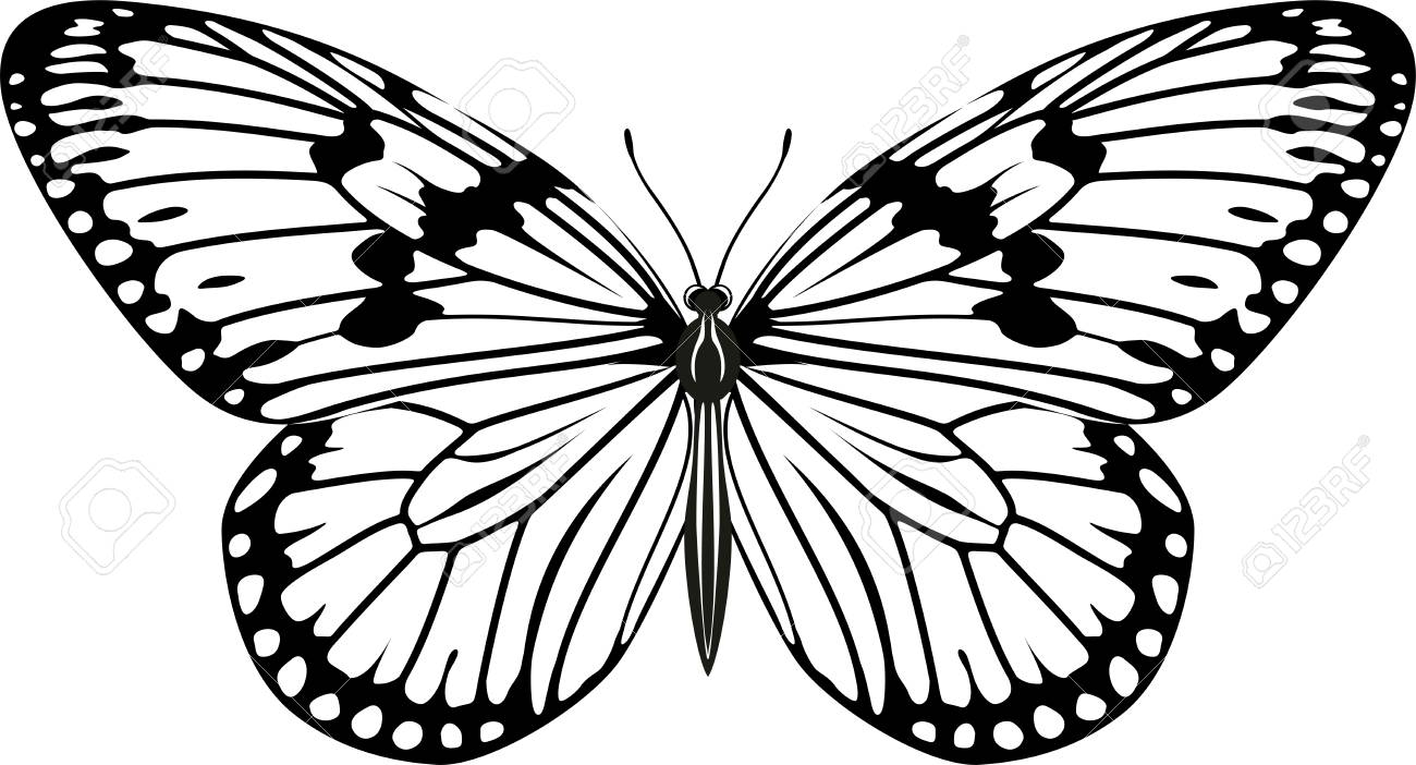 vector Paper kite or Rice paper butterfly (Idea leuconoe).
