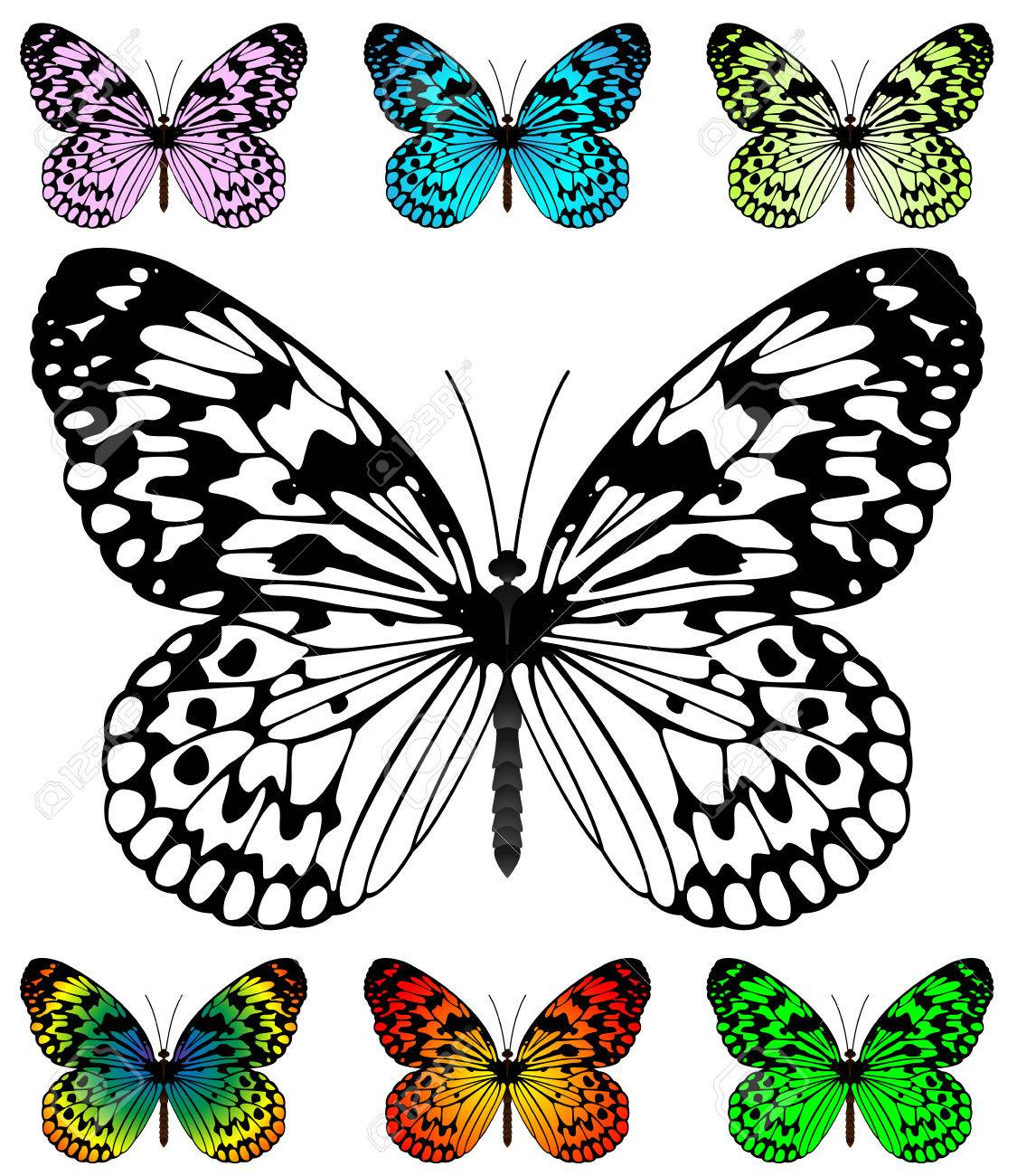 Butterfly vector template with samples. Easy editable wings color.