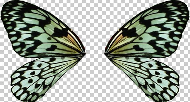 Monarch Butterfly Idea Leuconoe Moth Insect PNG, Clipart, Animal.