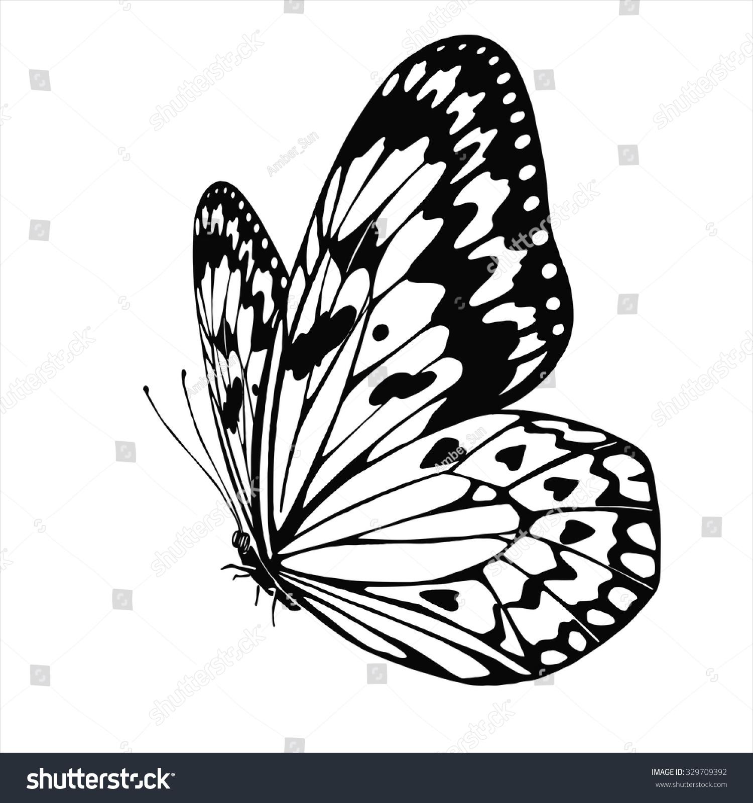 Vector Butterfly Idea Leuconoe Isolated On Stock Vector (Royalty.