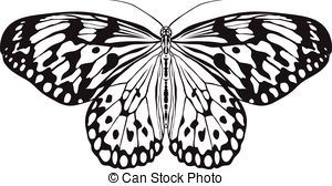 Insect anatomy. sticker butterfly idea leuconoe. rice paper kite.
