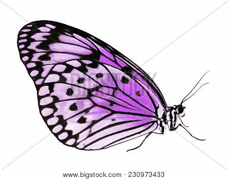 Paper Kite Butterfly, Image & Photo (Free Trial).
