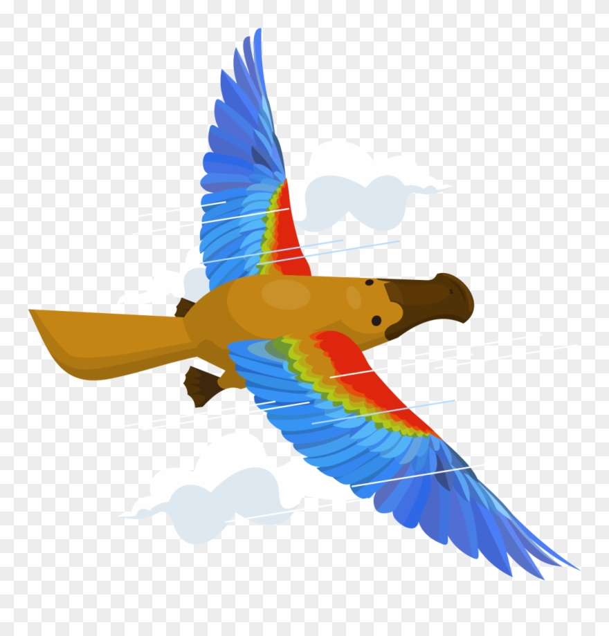 How Do I Fly The Platypus & Grow My Business.