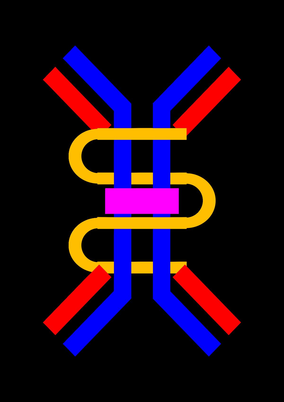 Immunoglobulin A.