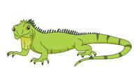 Free Iguana Clipart.