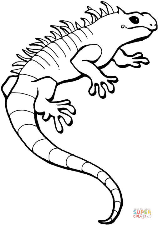 Iguana clipart black and white 6 » Clipart Station.