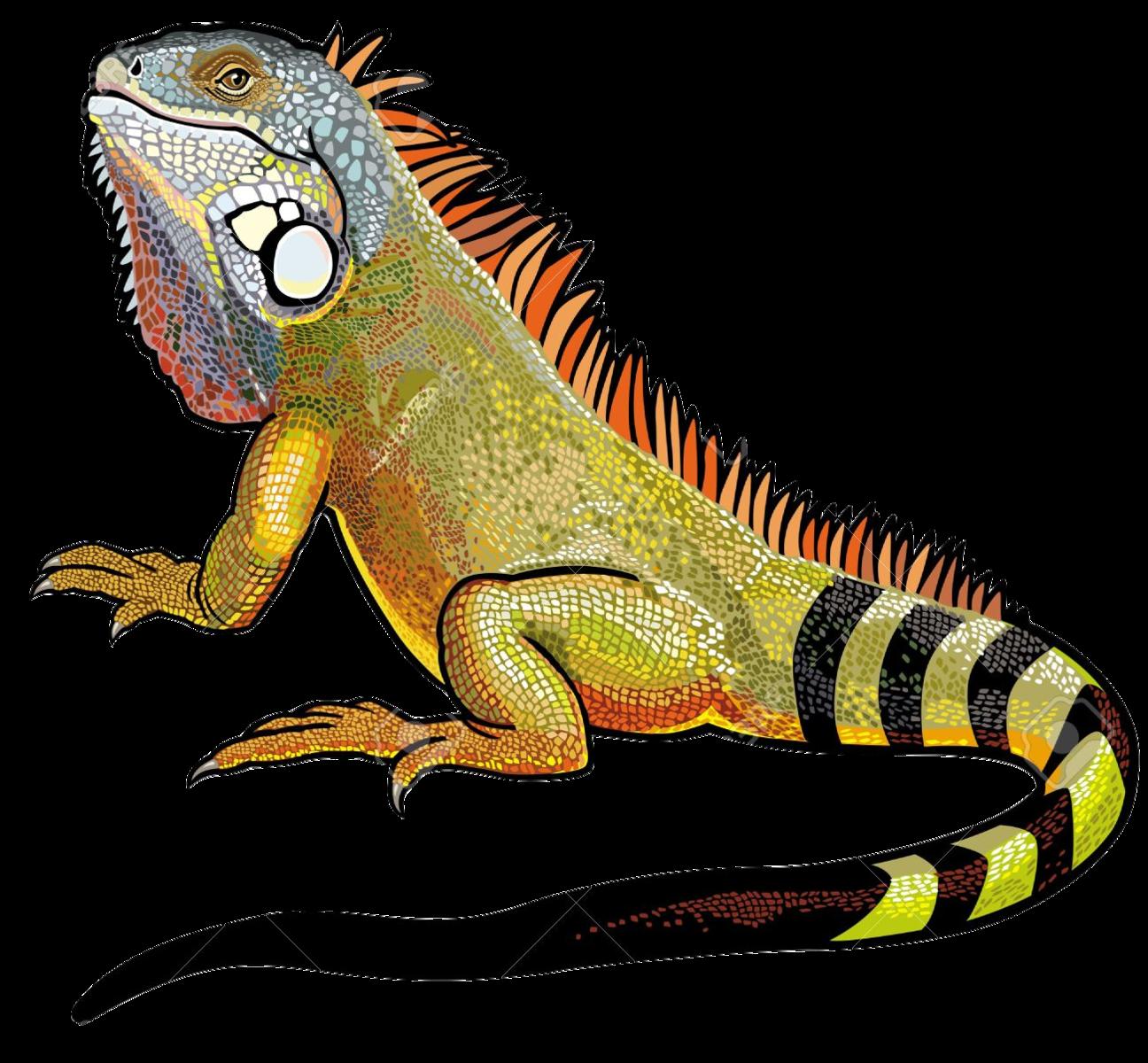 Download Iguana PNG File.