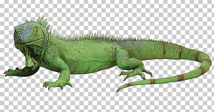 Lizard Reptile Green Iguana Chameleons PNG, Clipart, Animal, Animal.