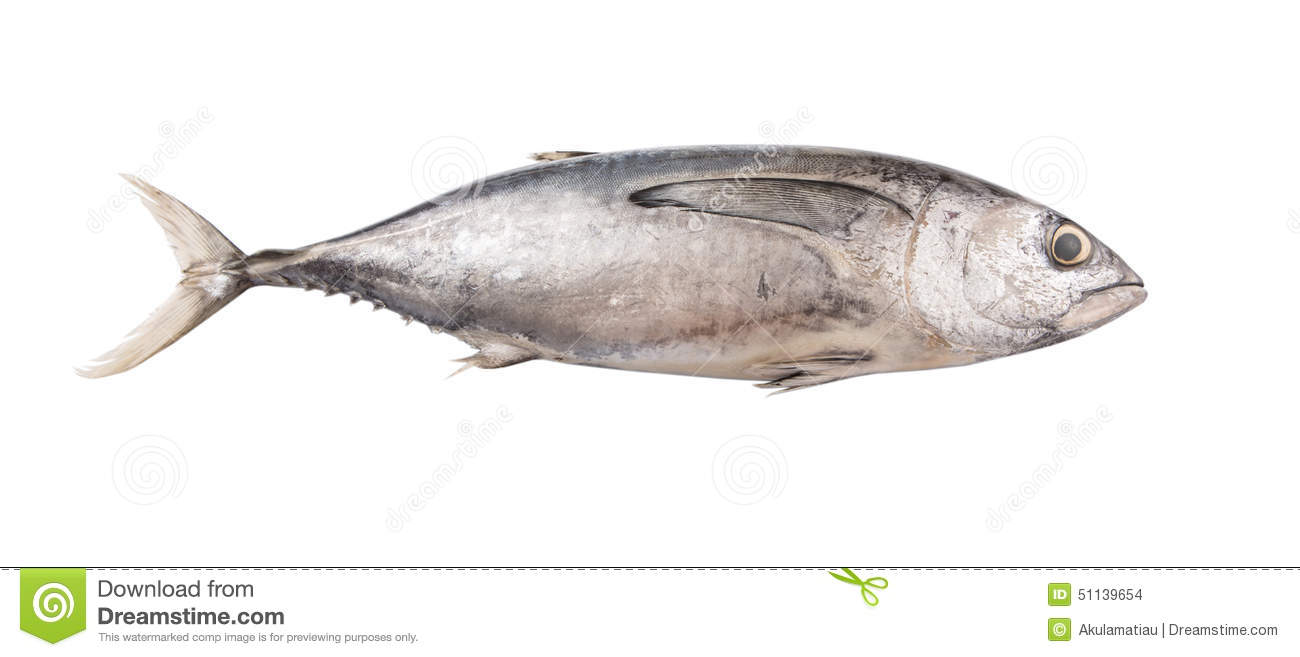 Mackerel Tuna Fish II Stock Photo.