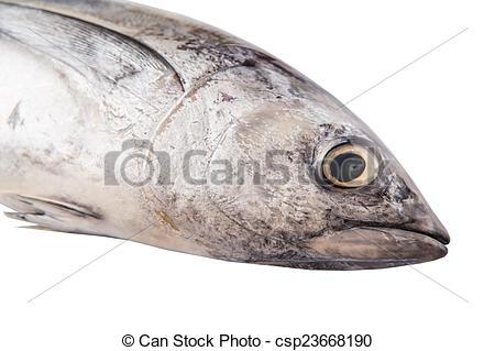 Stock Photographs of Mackerel Tuna Fish.
