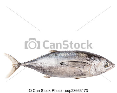 Picture of Mackerel Tuna Fish.