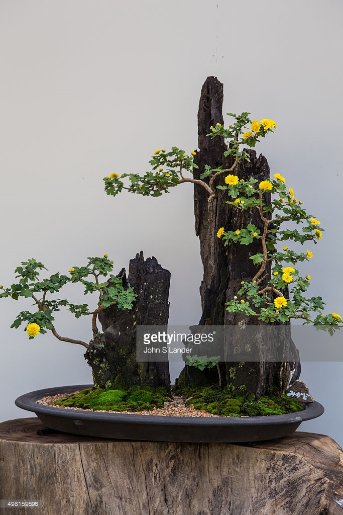 Ikebana, meaning 'arranged flower' is the Japanese art of.