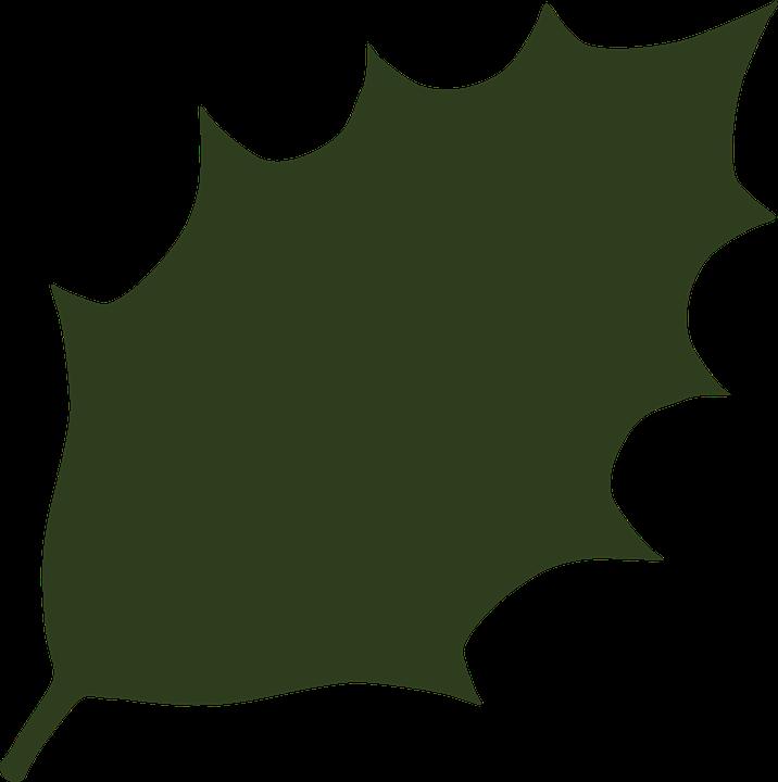 Free vector graphic: Holly, Ilex Aquifolium, Ilex, Leaf.