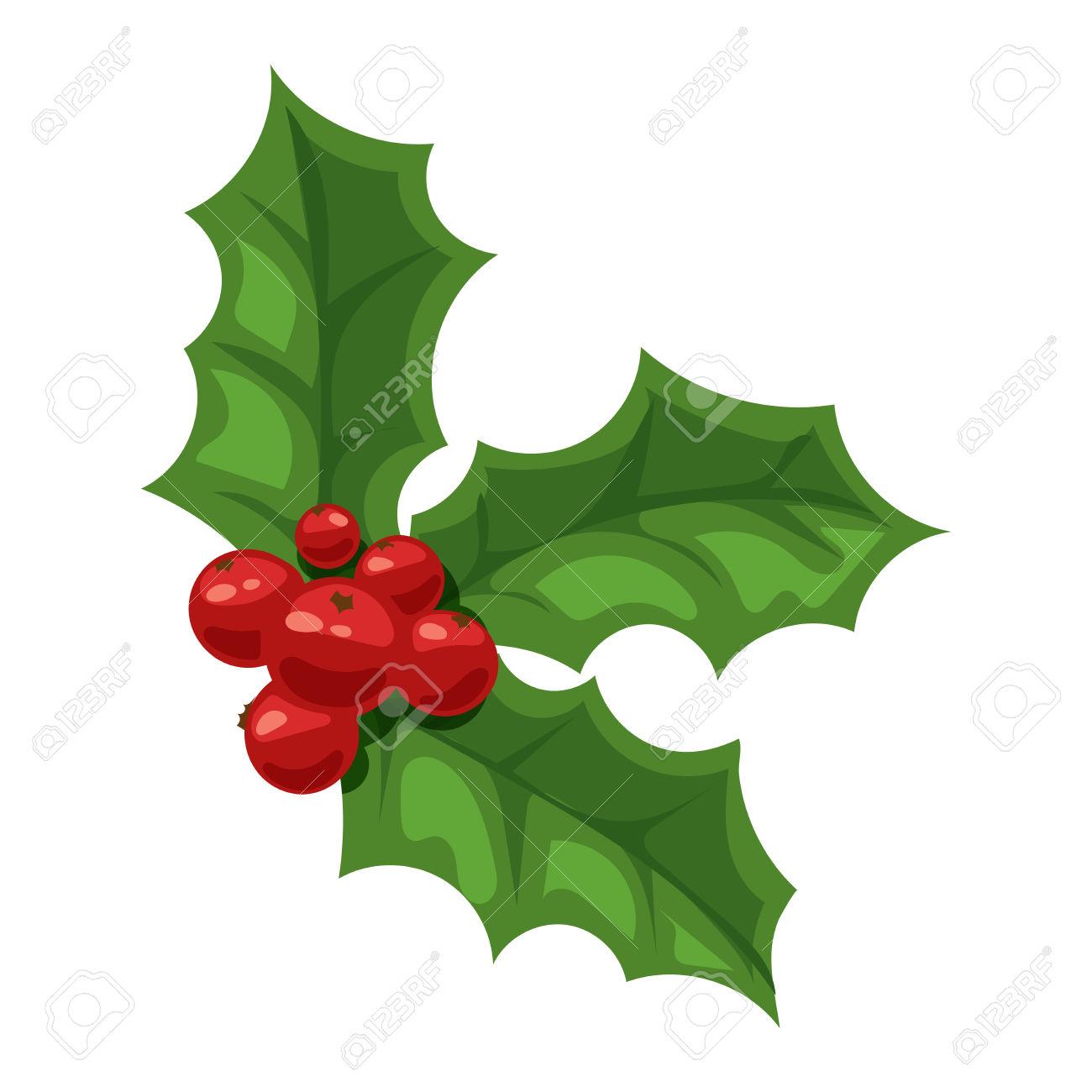 European Christmas Berry Holly Ilex Aquifolium Leaves And Fruit.