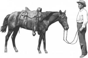 Wipp Illnau Effretikon Coat Of Arms Clip Art Download.
