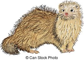 EPS Vector of Ferret.