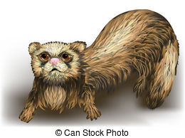 Ferret Illustrations and Clip Art. 338 Ferret royalty free.