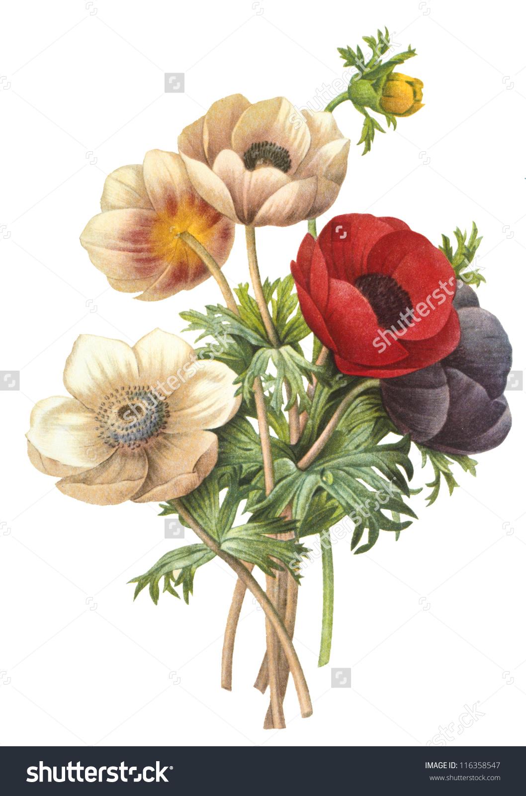 Flower Illustration Stock Photo 116358547.