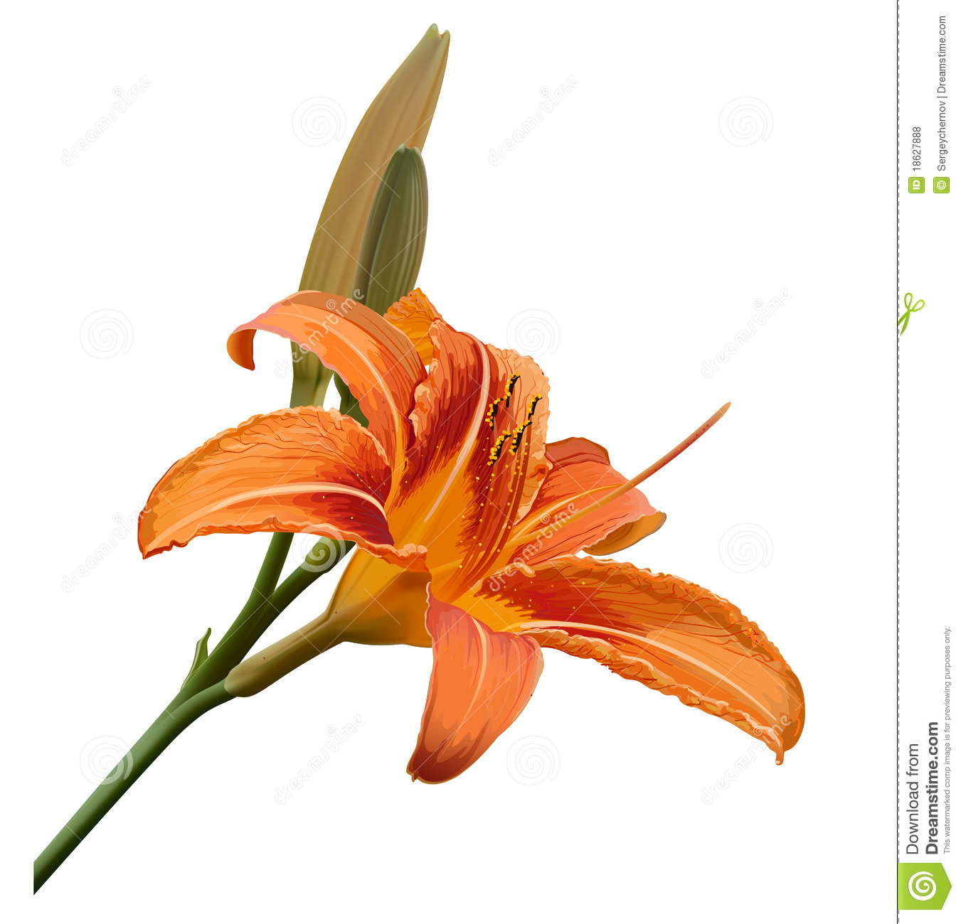Lily Flower Illustration Royalty Free Stock Photos.