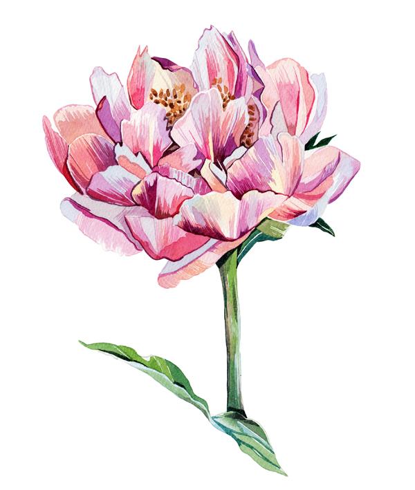 Illustration Of Flower.