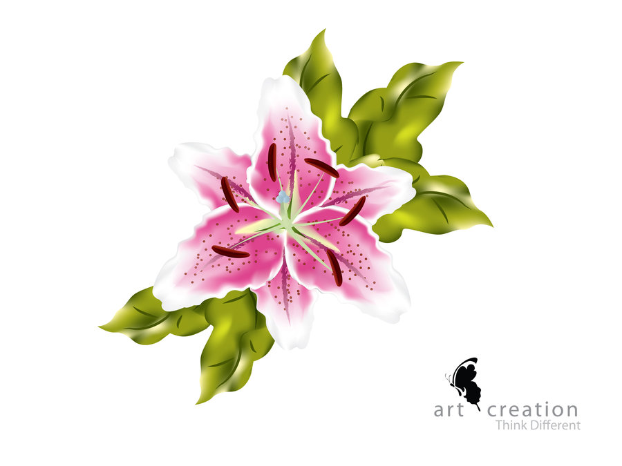 Flower Illustration by gemini28bd on DeviantArt.