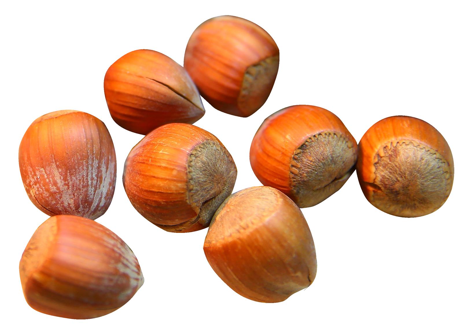 Chestnut PNG Images.