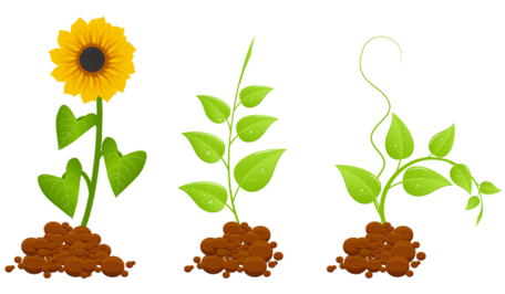 Plantas germinales Eco Clipart Picture Free Download.