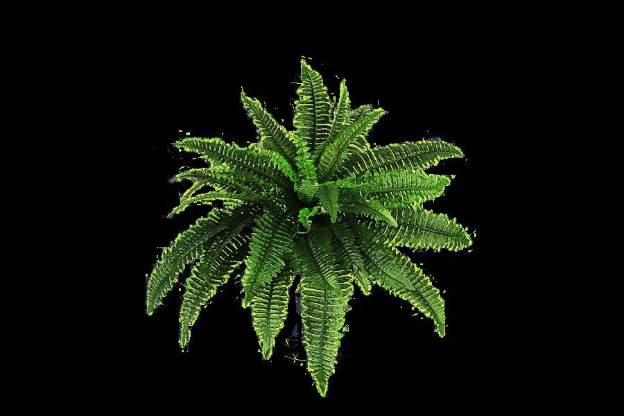 Arbusto Plantas PNG transparente.