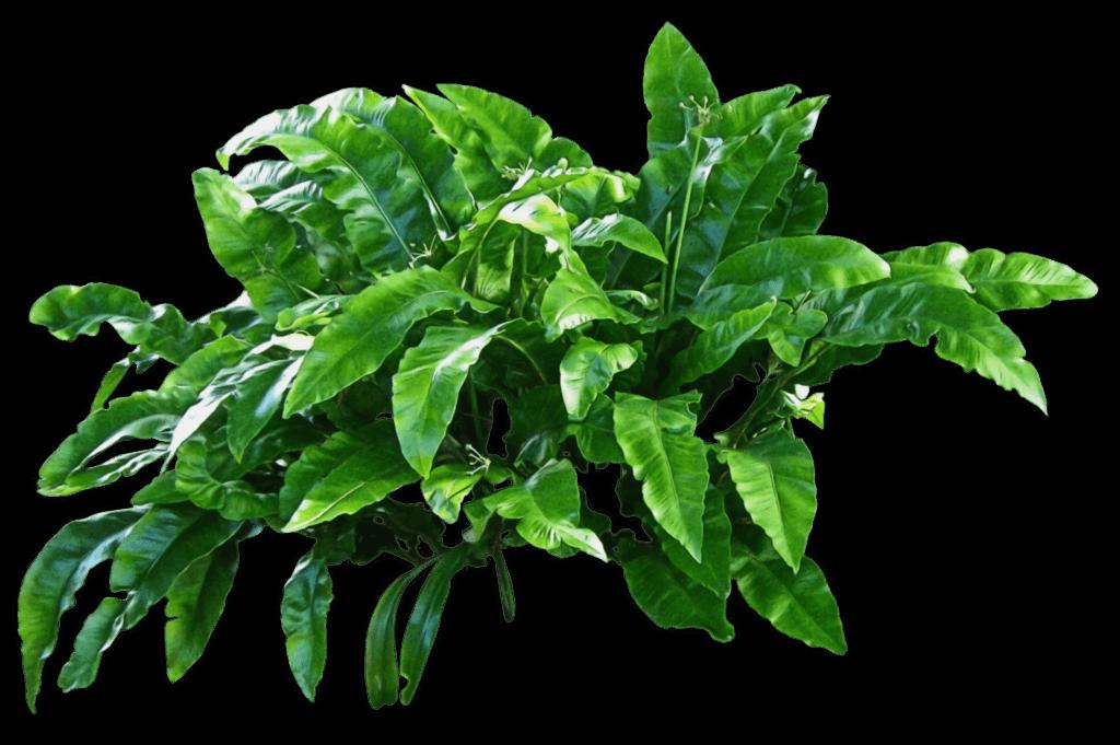 Plantas Verdes PNG transparente.