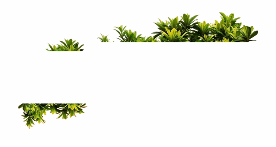 Plantas Png, Transparent Png Download For Free #1306279.