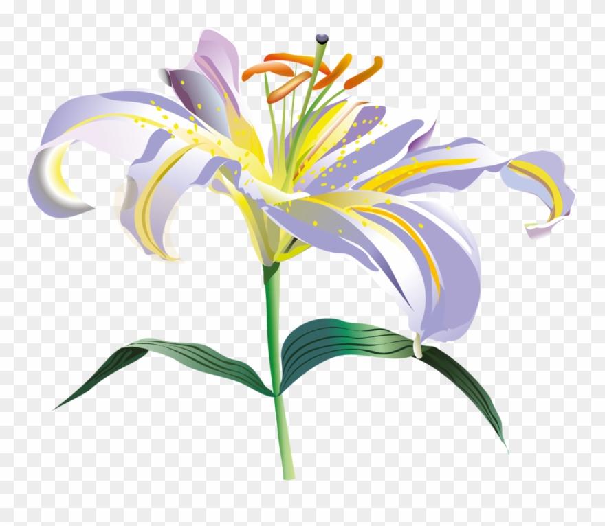 Flores Vectoriales Con Fondo Transparente.