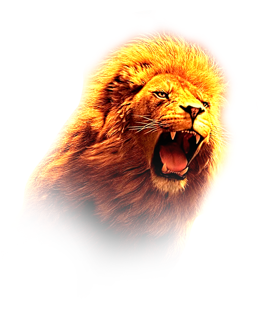 LION HD PNG image.