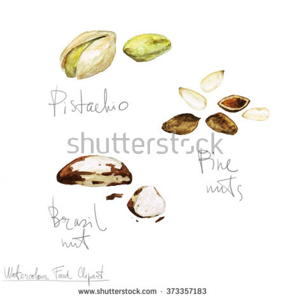 Images of nuts clipart the food.