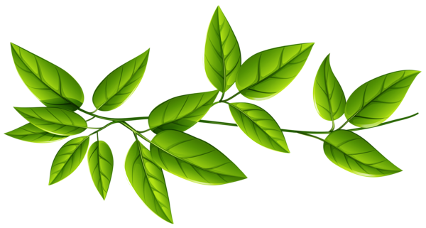 Download Leaves Free Download PNG.