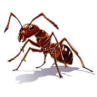 Download Ant Free PNG photo images and clipart.