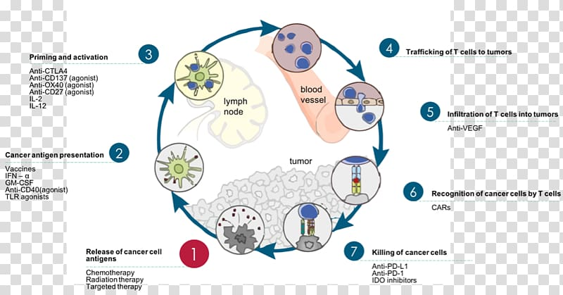 Immune system Cancer immunology Immune cycle Therapy.
