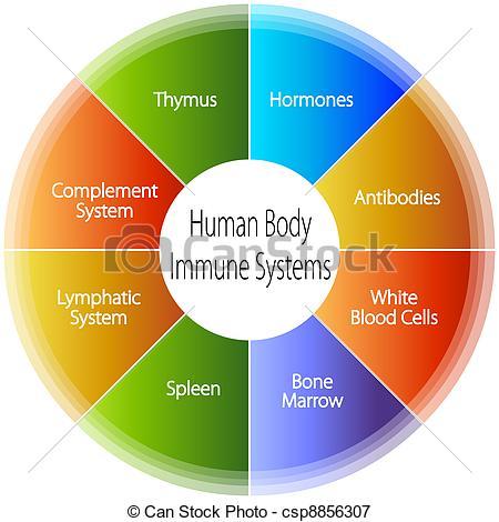 Human immune system Stock Illustration Images. 893 Human immune.