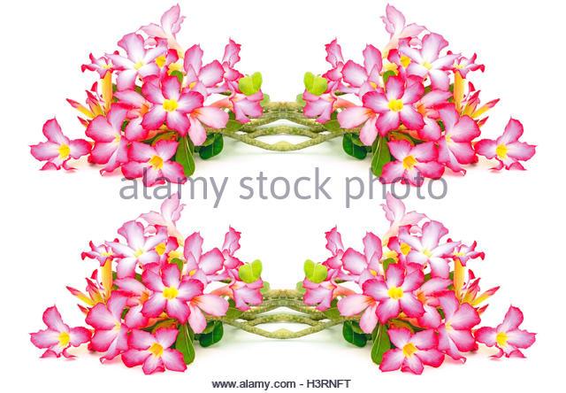 Impala Lily Stock Photos & Impala Lily Stock Images.