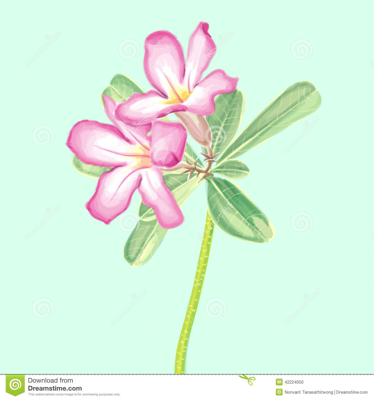 Vector Watercolor Painting Of Impala Lily Stock Illustration.
