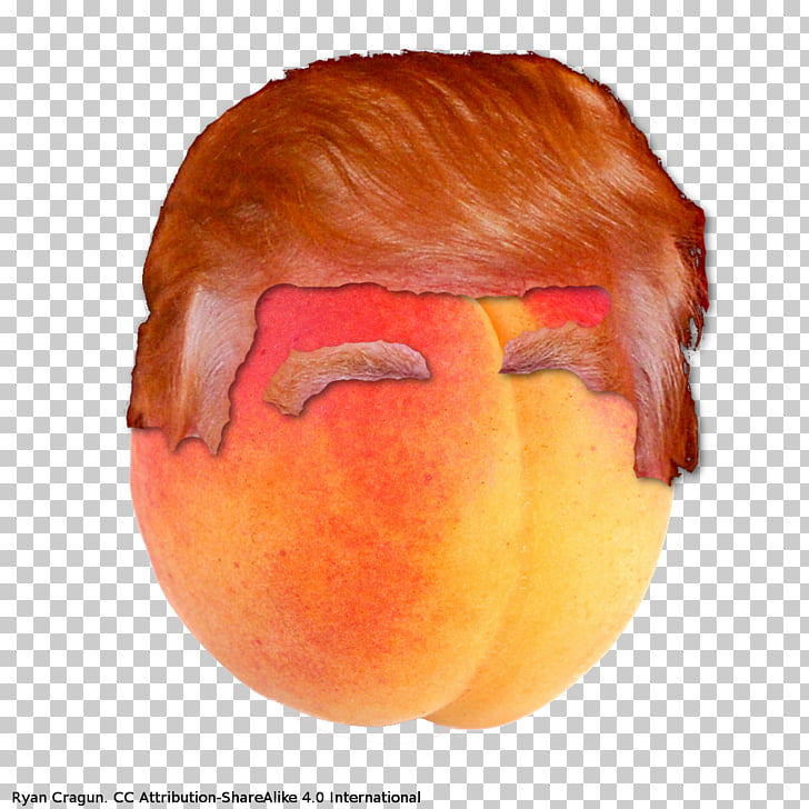 Efforts to impeach Donald Trump Hair, donald trump PNG.