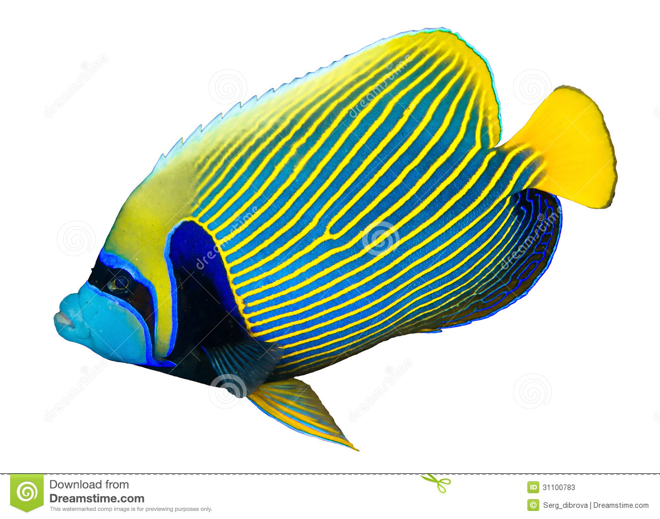 Angel Fish Clipart.