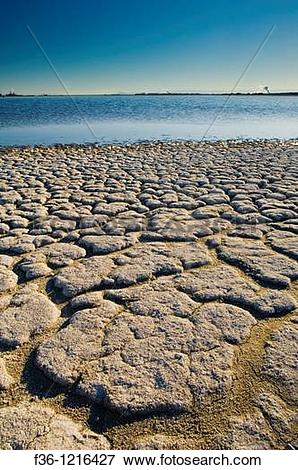Picture of Dry cracked soil along the shoreline of the Salton Sea.