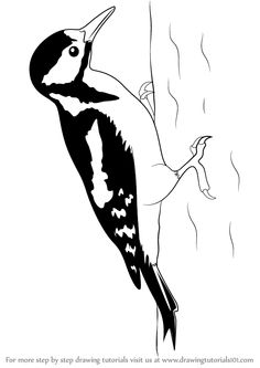 Imperial woodpecker clipart #19
