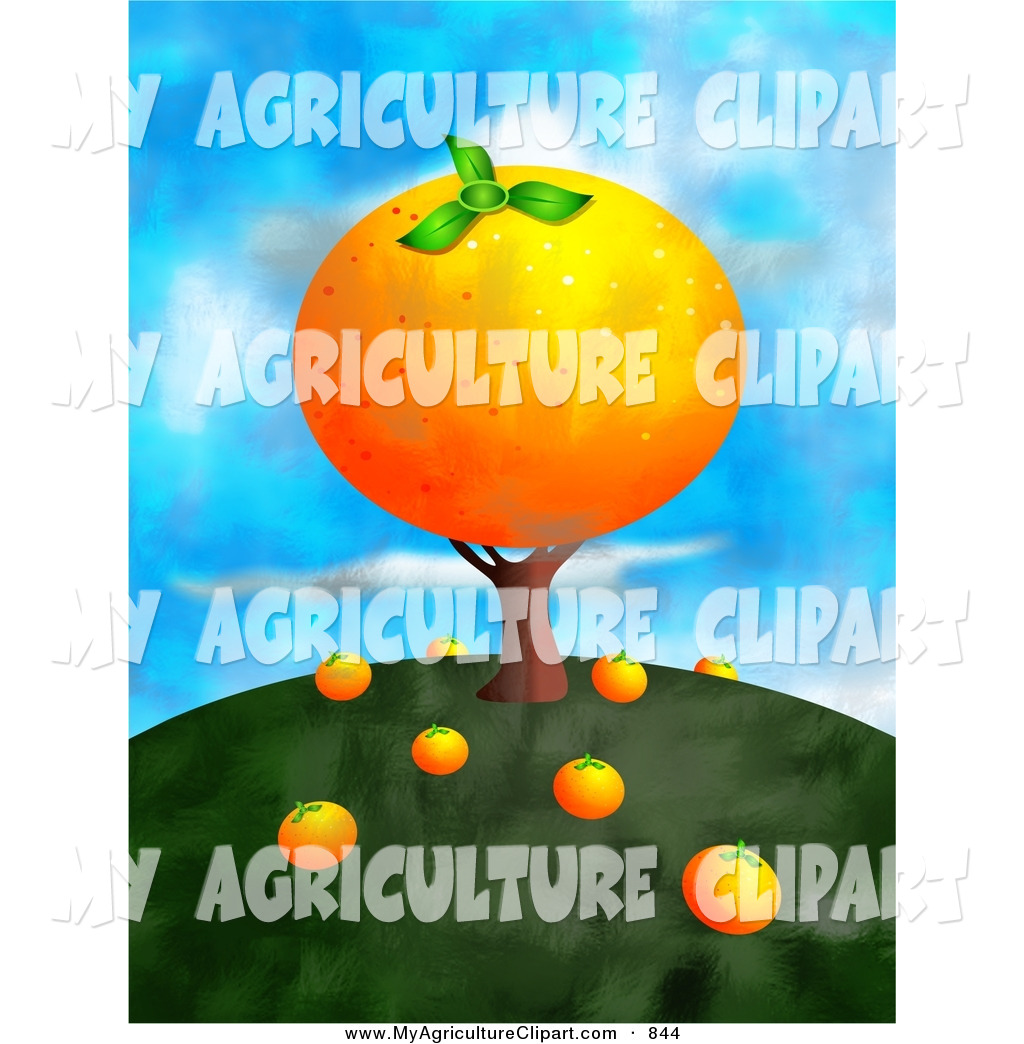 Agriculture Clipart of a Giant Orange on a Growing Tree with.