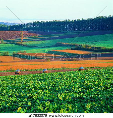 "Stock Photograph of ""Beautiful scene in grassfield in Hokkaido."