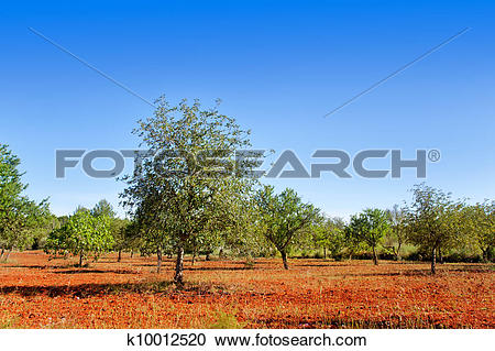 Stock Photography of Agriculture in Ibiza island mixed.