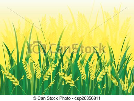 Rice field Vector Clipart Royalty Free. 316 Rice field clip art.