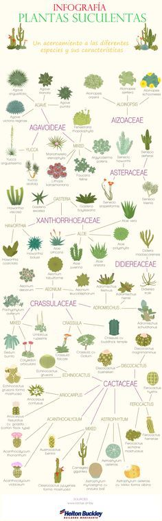 17 Best images about plants on Pinterest.
