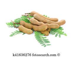 Indehiscent legume Stock Photo Images. 6 indehiscent legume.
